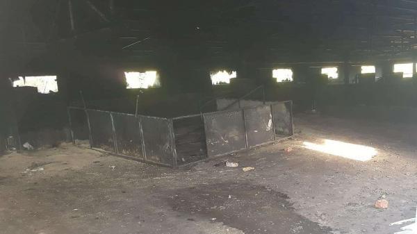 Chập điện, hơn 1.200 con lợn của người dân bị chết cháy