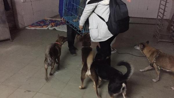 """Chuyện về """"hiệp sĩ"""" Ninh Bình cứu hộ chó tại Hà Nội"""