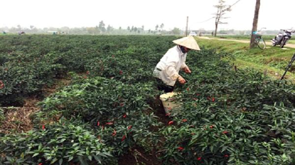 Khánh Vân: Tập trung phát triển kinh tế, xây dựng nông thôn mới