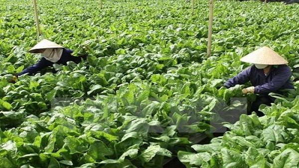 Ninh Bình đẩy mạnh tái cơ cấu nông nghiệp