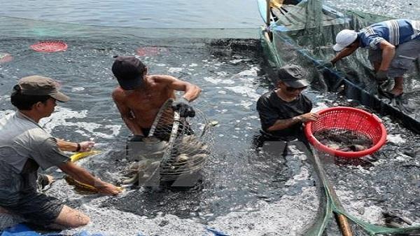 Ninh Bình đưa công nghệ cao vào phát triển thủy sản
