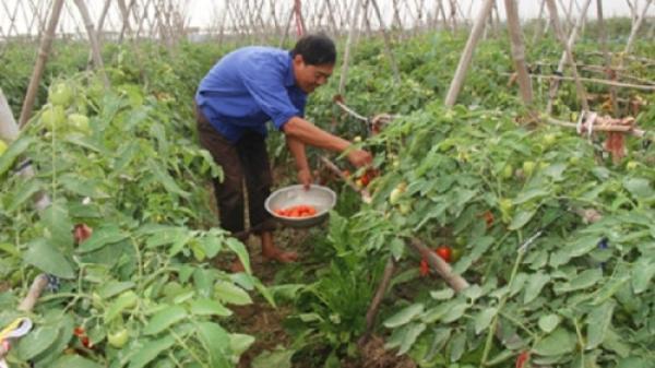 Yên Khánh - Ninh Bình: Điểm sáng nông nghiệp ứng dụng công nghệ cao