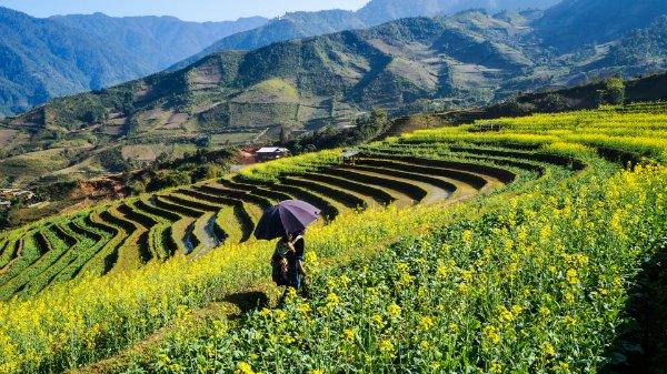 Thổn thức trước thiên đường hoa cải vàng ở Yên Bái