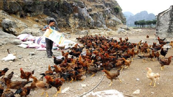 Ninh Bình: Làm giàu từ mô hình chăn nuôi tổng hợp