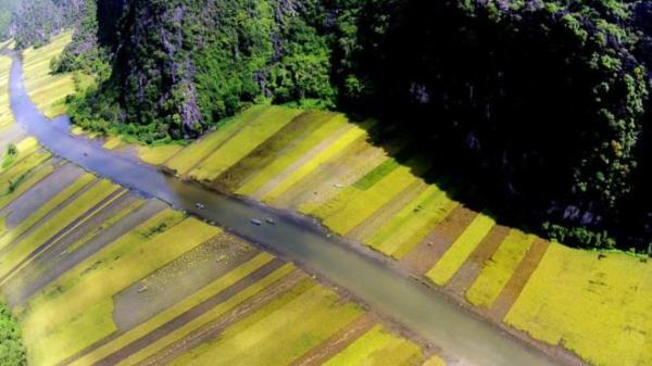 """Đẹp mê mải cảnh lúa chín phủ vàng nhìn từ """"Vạn Lý Trường Thành của Việt Nam"""""""