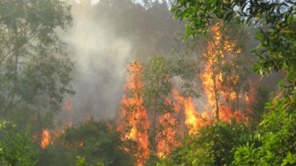 Nho Quan: Cháy 1000m2 rừng trong sân golf Tràng An