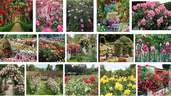 Không xa Ninh Bình sắp có công viên hoa hồng lớn nhất cả nước