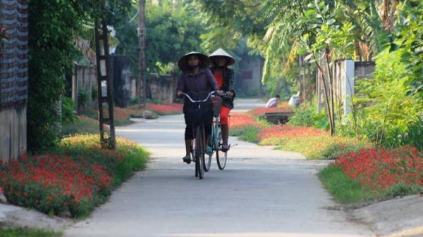 Ghé thăm con đường nở đầy hoa mười giờ đẹp như tranh vẽ ở Quảng Bình