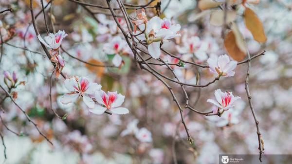 Người dân háo hức chờ đón những món ngon đặc sắc từ loài hoa của núi rừng Tây Bắc