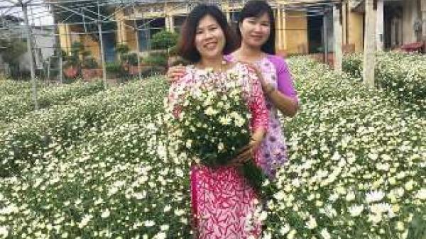 Chị em Ninh Bình nô nức đi chụp ảnh ở vườn cúc họa mi ngay trung tâm thành phố