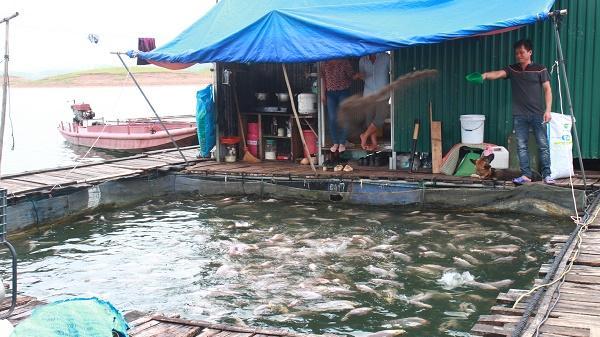 Yên Bái ngăn chặn tình trạng v.i p.hạm nuôi cá lồng trái phép trên Hồ Thác Bà