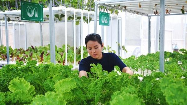 Mát mắt vườn rau thủy canh giữa lòng thành phố Điện Biên Phủ