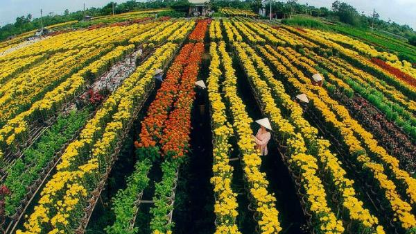 Làng hoa đẹp nhất Ninh Bình rộn ràng vào vụ Tết