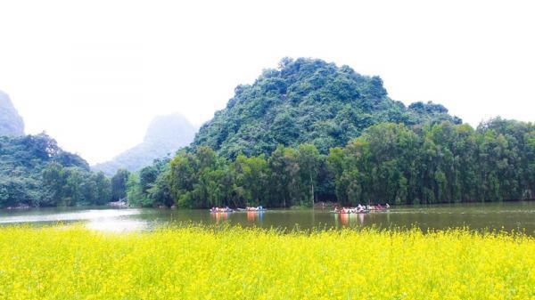 Vườn hoa cải vàng rực có 1-0-2 lần đầu tiên xuất hiện ở Ninh Bình 'đốn tim' hàng nghìn du khách