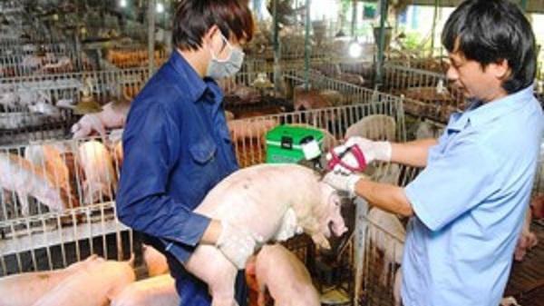 CẢNH BÁO: Xuất hiện gia súc có biểu hiện bệnh lở mồm long móng ở Điện Biên