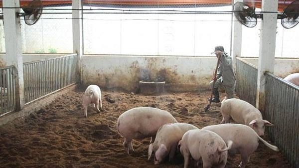 Điện Biên: Thống kê khoảng 300 gia súc bị lở mồm long móng