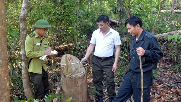 Điện Biên: Phát hiện hơn 7m3 gỗ bị khai thác t rái phép tại Nà Nhạn