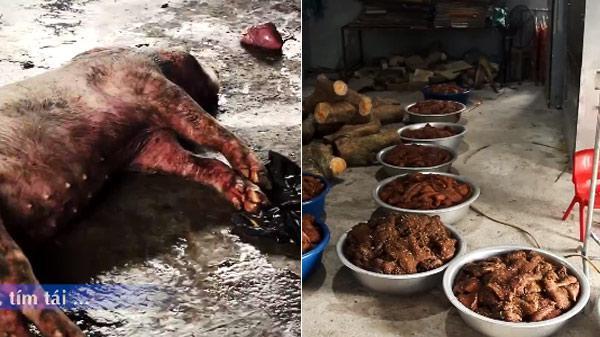 Clip: Lợn lở mồm long móng thành trâu gác bếp khiến dư luậnkinh hãi, xôn xao mấy ngày qua