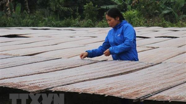 Yên Bái: Làng nghề miến đao Giới Phiên tất bật phục vụ thị trường Tết