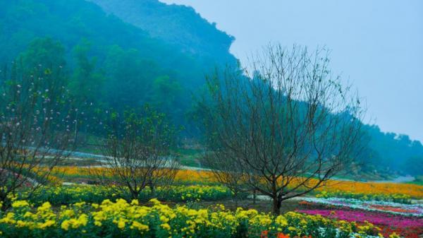 Ninh Bình: Hẹn hò 'check-in' với Lễ hội hoa Xuân Bái Đính tại thung lũng hoa rộng gần 15 hecta