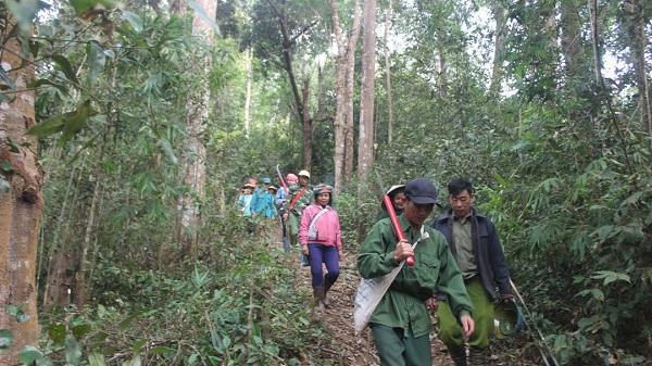 Điện Biên: Tăng cường quản lý bảo vệ và phòng ch.áy, chữa ch.áy rừng
