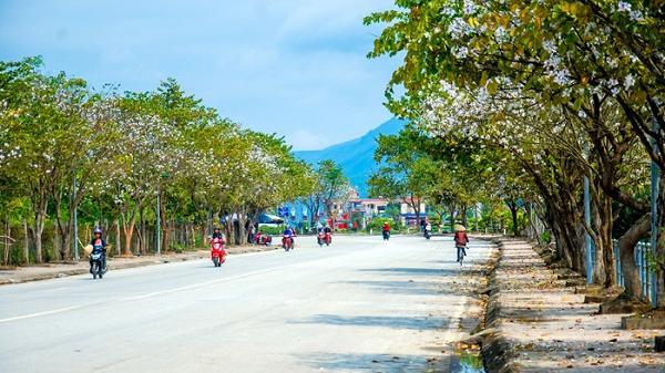 Gần 4.000 cây hoa ban đã sẵn sàng cho lễ hội hoa ban ở Điện Biên