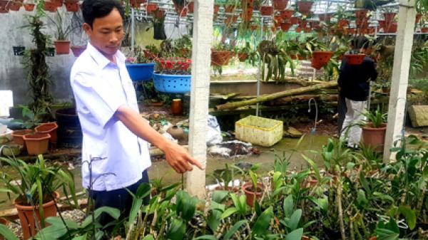 Ninh Bình: Trồng phong lan cho thu nhập hàng trăm triệu đồng mỗi năm