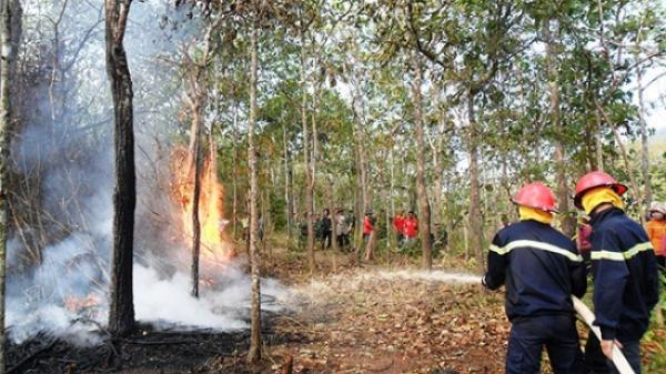 Gió khô nóng xuất hiện ở Yên Bái, cảnh báo nguy cơ cháy rừng trong thời tiết gay gắt