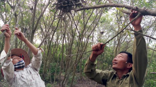 Ninh Bình: Đôi vợ chồng bảo vệ sinh thái vườn cò Gia Lạc