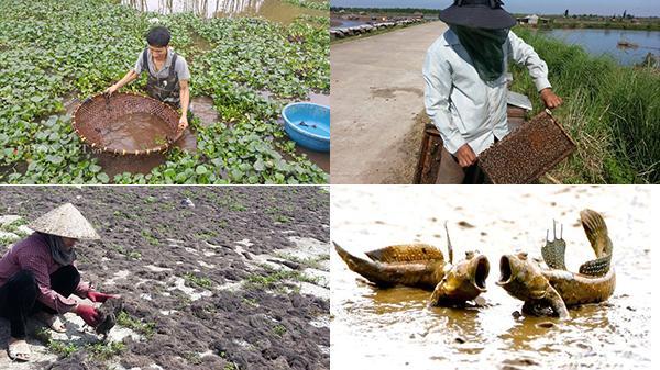 """4 nghề """"lạ"""" của nông dân Kim Sơn: Cứ chịu khó """"thò tay"""" là ra bạc triệu"""