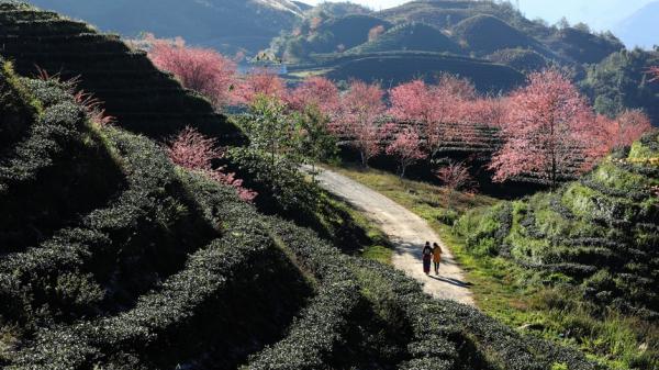 Sa Pa (Lào Cai) đẹp rực rỡ những ngày cuối năm