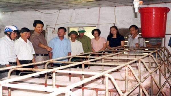 Trang trại lợn sạch của anh Lê Việt Hòa