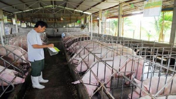 Giá lợn hơi chạm đáy, người chăn nuôi điêu đứng