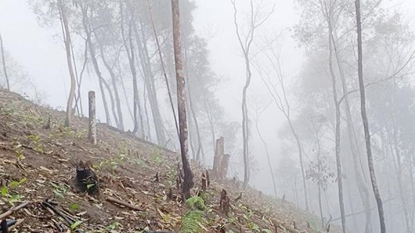 Phạt 380 triệu đồng các hộ dân phá rừng tập thể ở Lào Cai