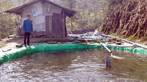 Lào Cai: Người nuôi cá hồi lao đao vì dịch Covid-19