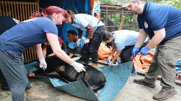 3 cá thể gấu ngựa bị nhốt gần 20 năm trong lồng ở Ninh Bình