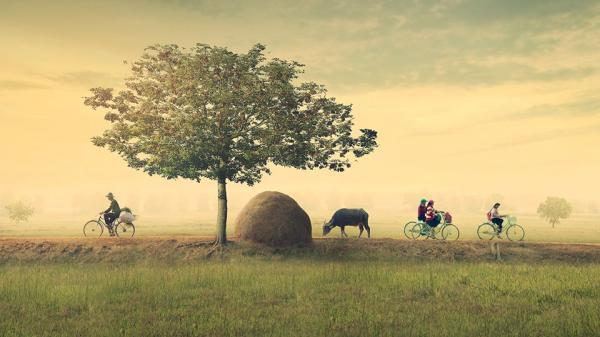 XÚC ĐỘNG: Ngắm loạt ảnh đồng quê Việt Nam bình dị này, ai cũng sẽ thấy quê hương mình ở trong đó...