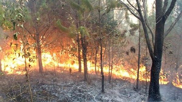 Cảnh báo cháy rừng khu vực miền Bắc