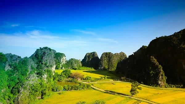 Những địa điểm ngắm mùa vàng tháng 6 đẹp nhất Ninh Bình