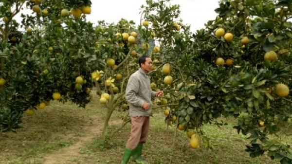 Thán phục chàng nông dân Ninh Bình biến đồi hoang thành trang trại bạc tỷ trên đất khách