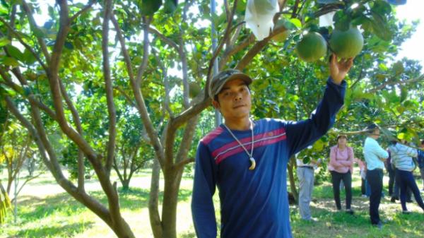 Ninh Thuận: Thâm canh cây ăn quả theo VietGAP, thu 300 - 700 triệu đồng/ha