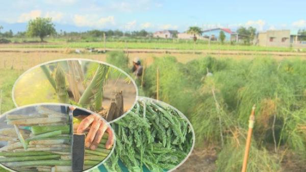 Thuận Nam : Đẩy mạnh chuyển đổi cây trồng cạn