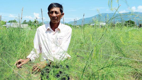Ninh Thuận: Tác động phát triển sản xuất nông nghiệp trong xây dựng nông thôn mới