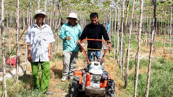 Phước Hậu: Nông dân đưa thiết bị cơ giới vào làm cỏ vườn nho