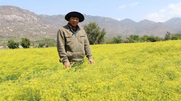 Ninh Thuận đẩy mạnh phát triển du lịch từ lợi thế nông nghiệp