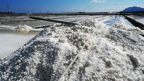 Ninh Thuận: Đồng muối Cà Ná trên 100 năm tuổi