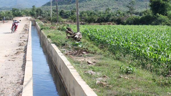 Ninh Phước: Kiên cố hóa kênh mương nội đồng phục vụ hiệu quả sản xuất nông nghiệp