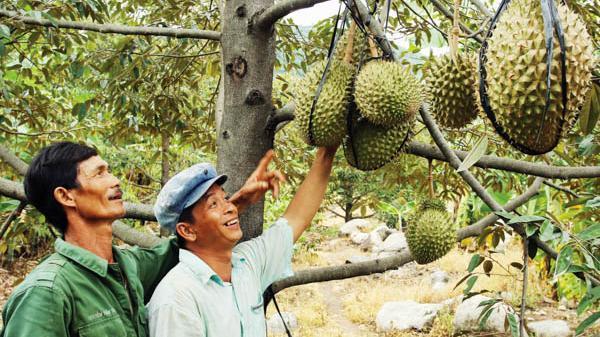 Ninh Sơn khai thác tiềm năng, lợi thế phát triển sản xuất nông nghiệp
