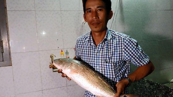 Người dân Mũi Né câu được cá nghi cá sủ vàng quý hiếm