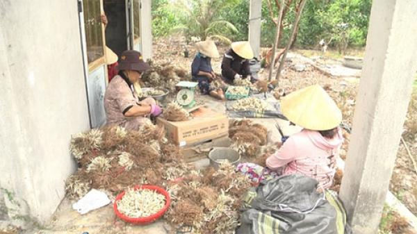 Bình Thuận: Chuẩn bị mùa kiệu Tết